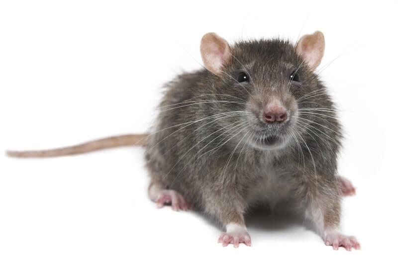 Expert Pest Control Birmingham Black Country